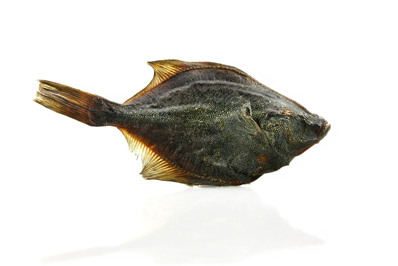 air dried whole flounder for dogs by Pets Best