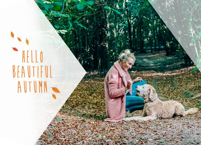 Pets Best Home banner autumn 2018