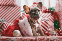 hund sitzt in weihnachtlicher kulisse mit geschenken