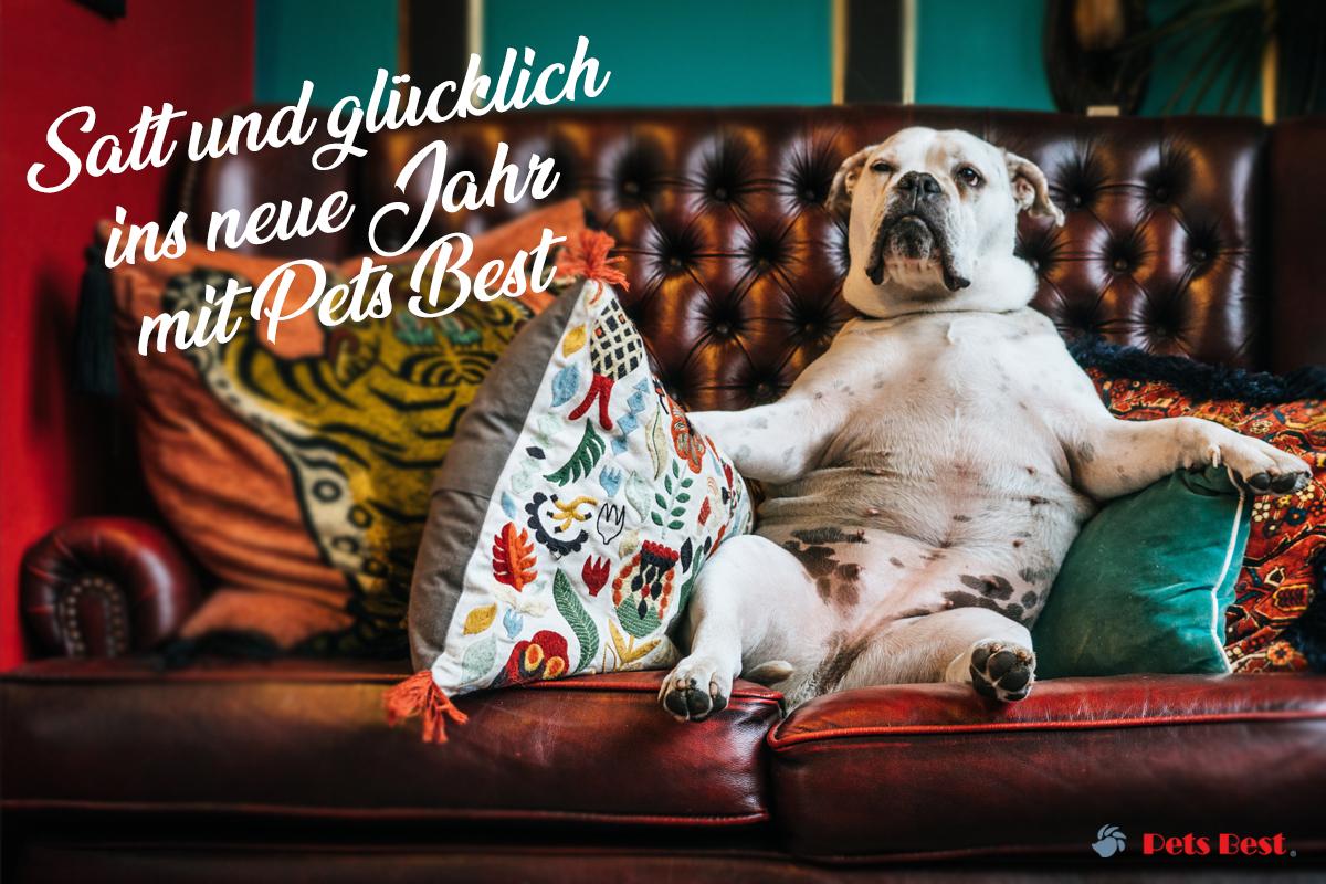 Hund auf Sofa Pets Best